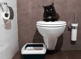 comment nettoyer l urine de chat remèdes de grand mère