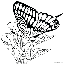 Printable Butterfly Coloring Page Cute Pages Best Of For