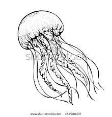jelly fish line art vector illustration