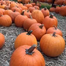 South San Jose Pumpkin Patch by Isle Of Faith Pumpkin Patch 45 Photos Festivals 1821 San