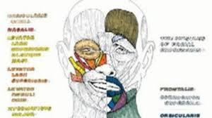 Xxaf Make A Photo Gallery Anatomy Coloring Book Wynn Kapit
