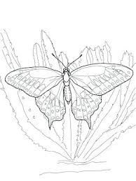 Swallowtail Butterfly Coloring Page Black Tiger