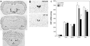 Bed Nucleus Of The Stria Terminalis by Chronic Administration Of The Selective Corticotropin Releasing