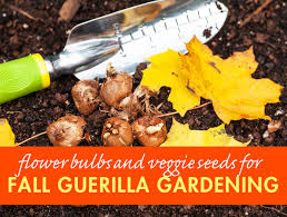 guerilla gardening in fall will bring early flowers next