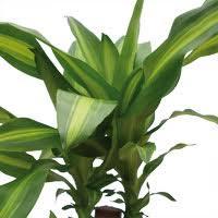 plantes vertes d interieur ferme et cueillette de gally jardinerie magasin de plantes les