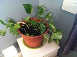 Best Plant For Bathroom by Best Indoor Plants No Light Best 25 Indoor Flowers Ideas On