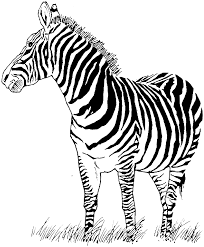 Free Online Zebra Coloring Pictures
