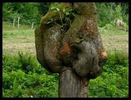 arbre qui s accroche à la vie par angelique charmasson sur l