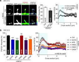Postsynaptic SDC2 induces transsynaptic signaling via FGF22 for