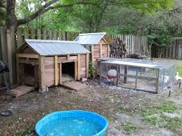 Pekin Ducks | BackYard Chickens Pond Makeover Feathers In The Woods Beautiful Backyard Landscape Ideas Completed With Small And Ponds Gone Wrong Episode 2 Part Youtube Diy Garden Interior Design Very Small Outside Water Features And Ponds For Fish Ese Zen Gardens Home 2017 Koi Duck House Exterior And Interior How To Make A Use Duck Pond Fodder Ftilizer Ducks Geese Build Nodig Under 70 Hawk Hill Waterfalls Call Free Estimate Of Duckingham Palace Is Hitable In Disarray Top Fish A Big Care
