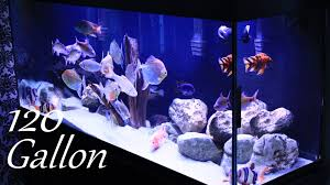 120 Gallon Fish Tank - YouTube I Really Want A Jellyfish Aquarium Home Pinterest Awesome Fish Tank Idea Cool Ideas 6741 The Top 10 Hotel Aquariums Photos Huffpost Diy Barconsole Table Mac Marlborough Tank Stand Alex Gives Up Amusing Experiments 18 Best Fish Images On Aquarium Ideas Diy Clear For Life Hexagon Hayneedle Bar Custom Tanks Ponds Designs For Freshwater Modern 364 And Tropical Ov Cylinder 2