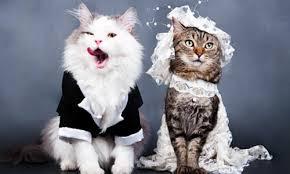 cat wedding dress how to choose summer wedding dresses 2012 for cats cat wedding