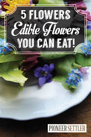 Edible Flowers | Edible Flowers, Homesteads And Flower Southern Forager Spring Edible Plants In Middle Tennessee Eating The Wild Your Backyard Fixcom Landscapes Think Blue Marin Gulf Coast Gardening For Weeds And You Can Eat Remodelaholic 25 Garden Ideas Backyards Amazing Uk Links We Love Planting Plant Landscaping Sacramento Landscape Blueberries Raspberriesplants For Your Summer Guide Oakland Berkeley Bay Area Paper Mill Playhouse Yard2kitchen 197 Best Edible Wild Plants Images On Pinterest Survival Skills