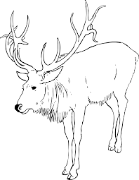 Reindeer Stag Black White Line Art Christmas Xmas Coloring Book Colouring 1969px 306K