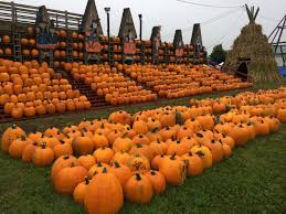 Southern Illinois Pumpkin Patches by 6 Pumpkin Festivals Across The Us