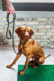 Do Vizsla Dogs Shed by 10 Best Pet Parents Images On Pinterest Parents Best Dog Breeds