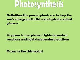Definition the process plants use to trap the sun s energy and