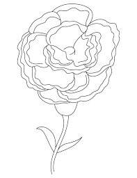 White Carnation Coloring Page