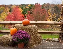 Patterson Farm Pumpkin Patch Ohio by Photography Unposed By Kolman Rosenberg Ramblings About