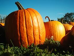 Pumpkin Patch Daycare Ct by Stratford United Methodist Church Holds Pumpkin Patch