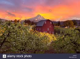 Sunset Over Mount Hood And Red Barn In Pear Orchard In Hood River ... Rustic Autumn Wedding Weston Red Barn Farm In Kc Mo Mini Shop Cellar Orchard Wood Shed All On And Stock Photo Image 59789270 Minnesota Harvest Apple Weddingreception Venue The At Gibbet Hill Pictures From The Orchard Weve Got Your Favorite Review Of Park Na Usa Oregon Hood River County Barn Pear Building And Golden Ears Coast Mountains Fall Landscape Unique Bolton Ma A Red Schartner Massachusetts Best Horse Designs Hardscape Design