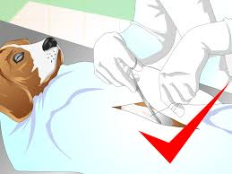 Using Pumpkin For Dog Constipation by How To Treat Dog Constipation 9 Steps With Pictures Wikihow