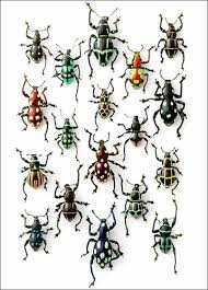 Walking Weevils Note Pad BioQuip Products Inc