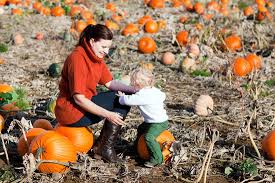 Pumpkin Farms Southern Illinois by All Seasons Orchard Apple Orchard Pumpkin Picking Woodstock