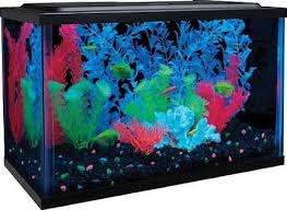 Lava Lamp Fish Tank Walmart by 18 Best Glofish Images On Pinterest Aquariums Balanced Diet And
