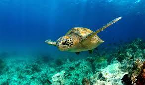 monterey bay aquarium exhibits rocky shore open sea