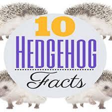 Ceramic Heat Lamp For Hedgehog by Best 25 Hedgehog Habitat Ideas On Pinterest Guinea Pig House
