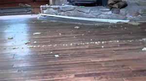 Long Floor Staple Remover by Removing Carpet Over Hardwood Floors Youtube
