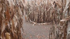 Pumpkin Patch Utah South Jordan by A Family Left A Toddler In A Corn Maze And Didn U0027t Realize It Until