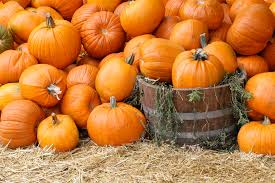 Grapevine Texas Pumpkin Patch by North Texas Pumpkin Patches