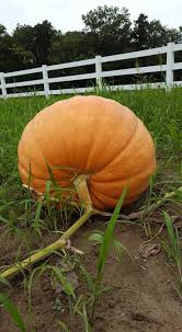 Southern Illinois Pumpkin Patches by Possum Patch Farms