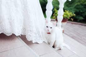cat wedding dress creating a pet friendly wedding weddingbee