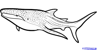 Coloring Pages Whale Shark Page Breadedcat Free