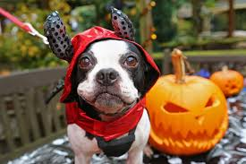 Halloween Jokes For Adults by Halloween 2017 In London For Kids U2013 Things To Do With Kids In London