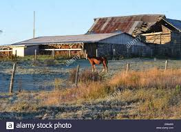 Horse Behind Barn Stock Photo, Royalty Free Image: 75694223 - Alamy Tammie Dickersons Arstic Journey September 2014 The 7msn Ranch Breakfast From Behind The Barn John Elkington Caroline From 0 To 60 In Well Years Sunrise Behind A Barn On Foggy Morning Stock Photo Image 79809047 Red Trees 88308572 Untitled Document Our Restoration Preserving History Through Barnwood Rebuild Tornado Forming Old Royalty Free Images Sketch For By Hbert Sidney Palmer At Consignorca Shed Olper And Fustein Innervals Vals Valley Towering Sunflower Growing Beside Bigstock