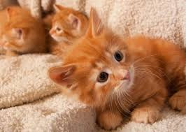 orange cat names 18 best kitty images on kitty cats animals and orange