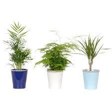 grünpflanzen mix in badezimmer keramik topf ø ca 12 cm