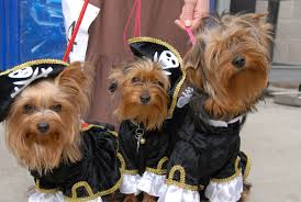 West Chester Halloween Parade by Dog Dogs Cute Animals Love Pirates Funny Cutest