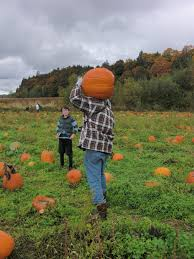 Pumpkin Patch Snohomish Wa by Pumpkin Patch Gardening In My Rubber Boots