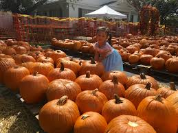 Daves Pumpkin Patch by Things To Do Visit This Delray Beach Church U0027s Pumpkin Patch And