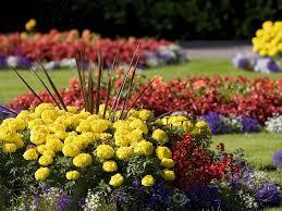 Flowers For Flower Beds by Flower English Garden Flowers Seasonal Summer Flower Beds Hd