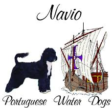 Portuguese Water Dog Shedding Problems by Portuguese Water Dog History