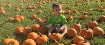 Pumpkin Patch Nashville Area by Fall Festival