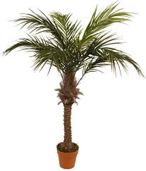 Pre Lit Christmas Tree Replacement Bulbs by Palm Tree Replacement Lights