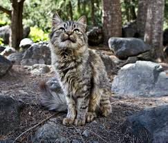 mountain cat mountain cat my scholarship entry a place i