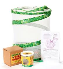 Amazon Live Butterfly Garden ONLY $12 66 Shipped Reg $20